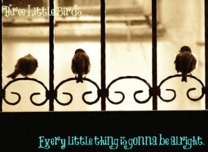 three-little-birds-window