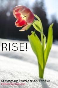 RISE Tulip 2